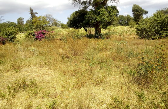 1/8 acre plots for sale in Kabete