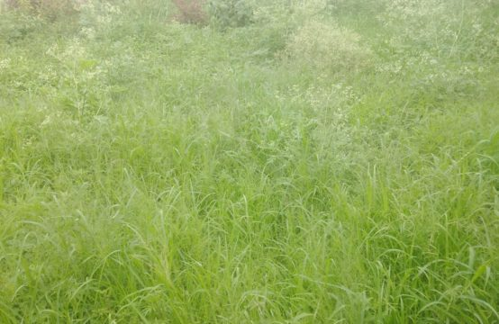 Prime plot for sale in Kasarani
