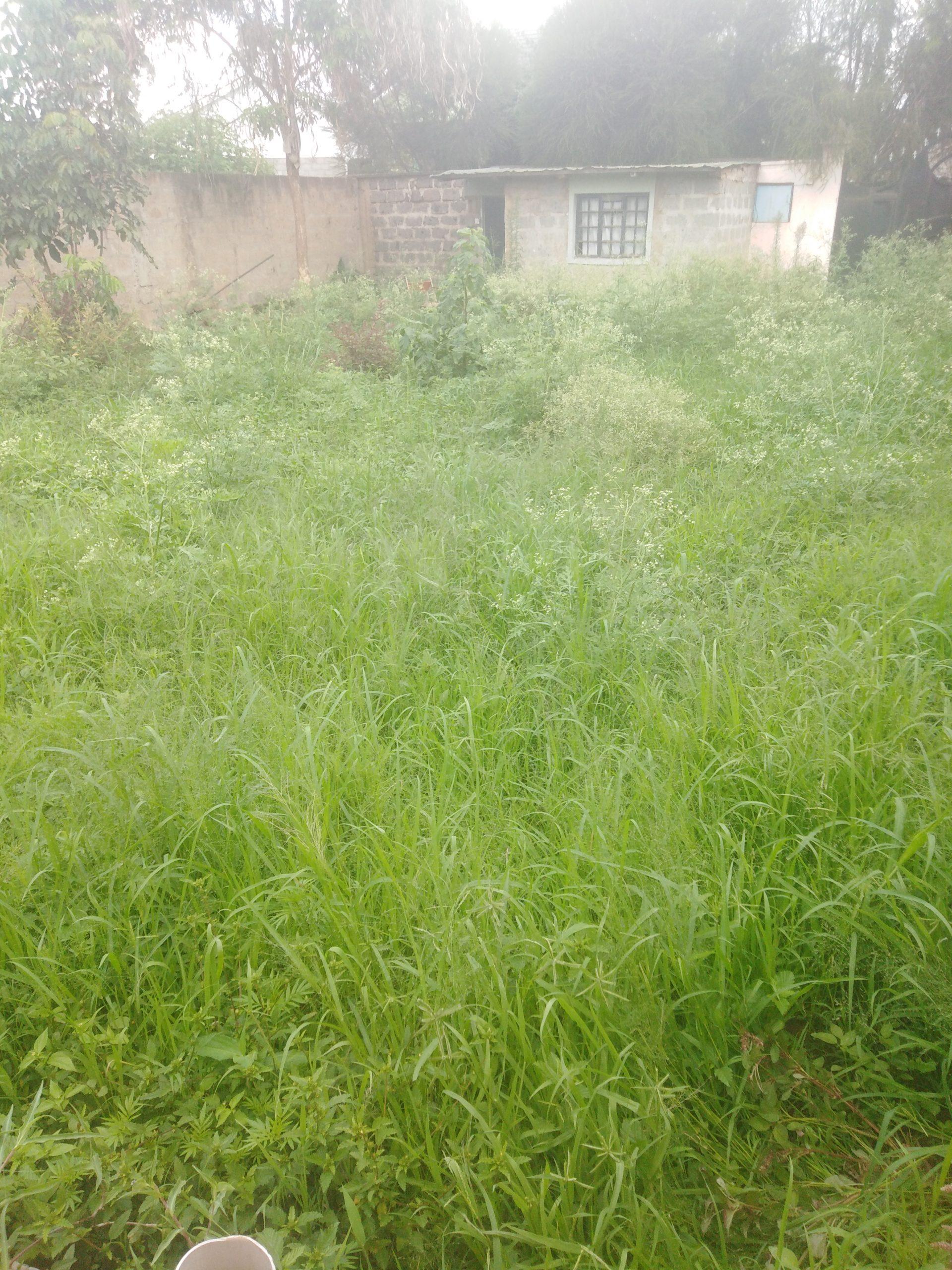 Prime plot for sale in Kasarani