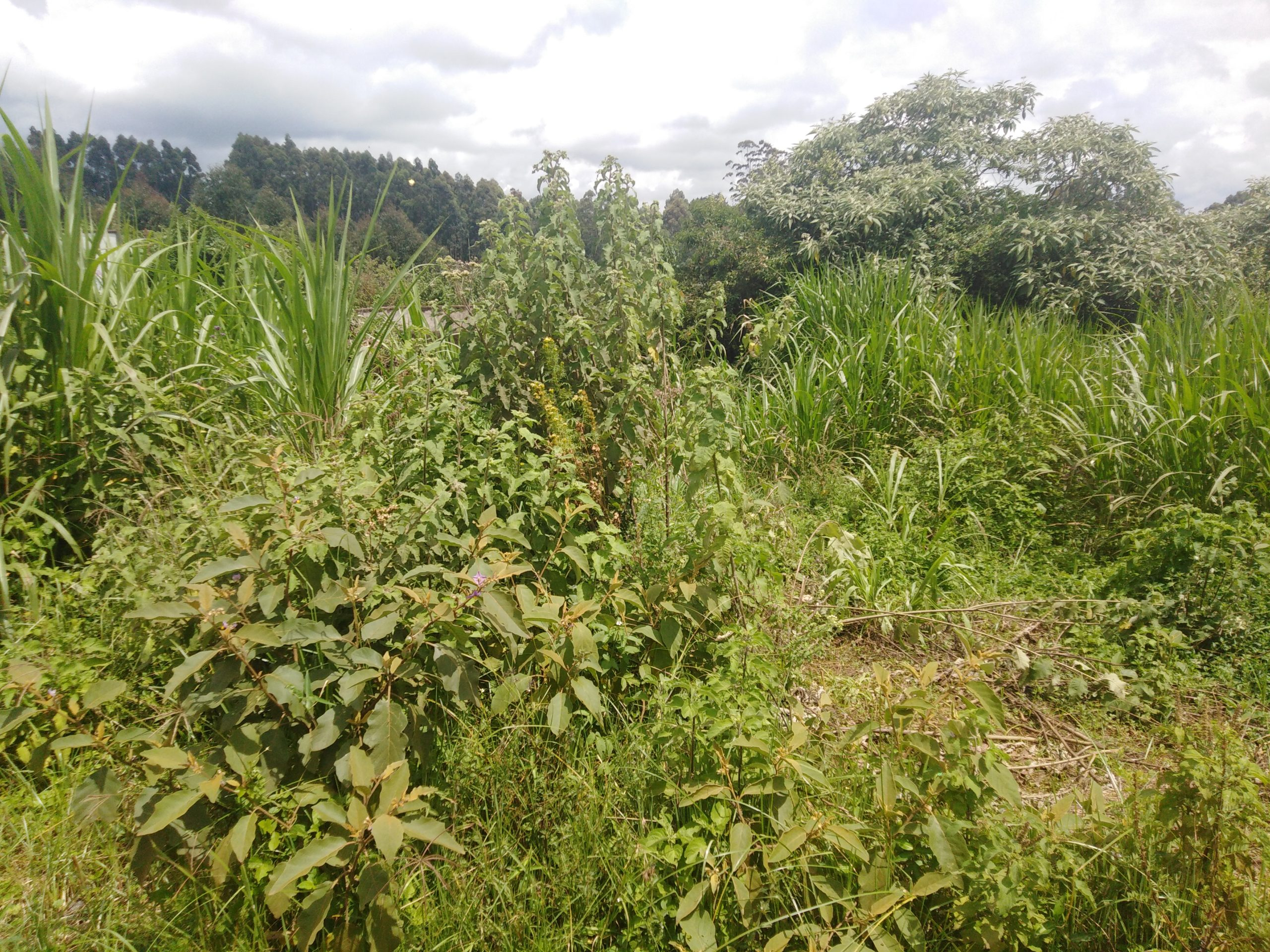 2.1 acre land for sale in Limuru